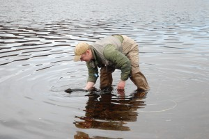 Carefully releasing a 'spring' salmon (Chris Conroy)